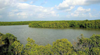 Muthupet Mangroves & Lagoon